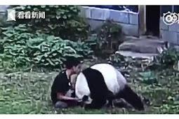 Demi Mengesankan Wanita, Pria Nekat Masuk ke Kandang Panda