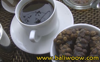 Fun to Feel Sensation of Drinking Kopi Luwak in Basanta Agro Organic