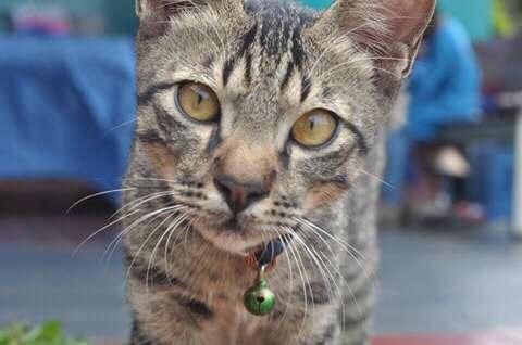 Aku kucing rumahan [ Rocky Stories ]