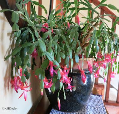 plant named Junior