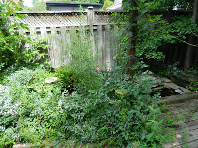 Broadview Danforth Toronto backyard clean up before by Paul Jung Gardening Services
