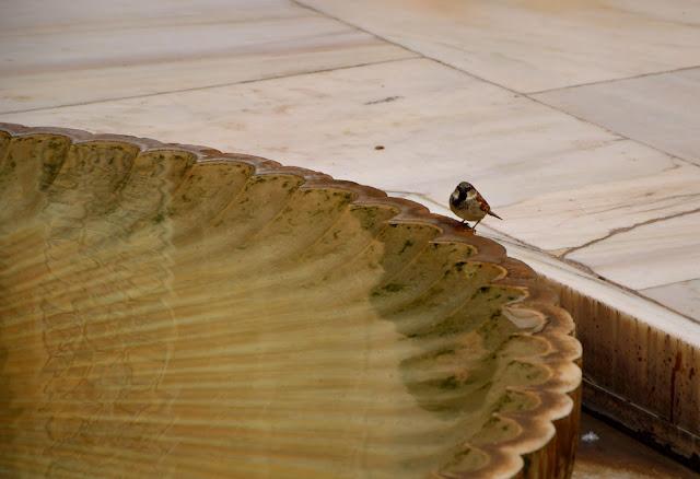 Fontanna Alhambra