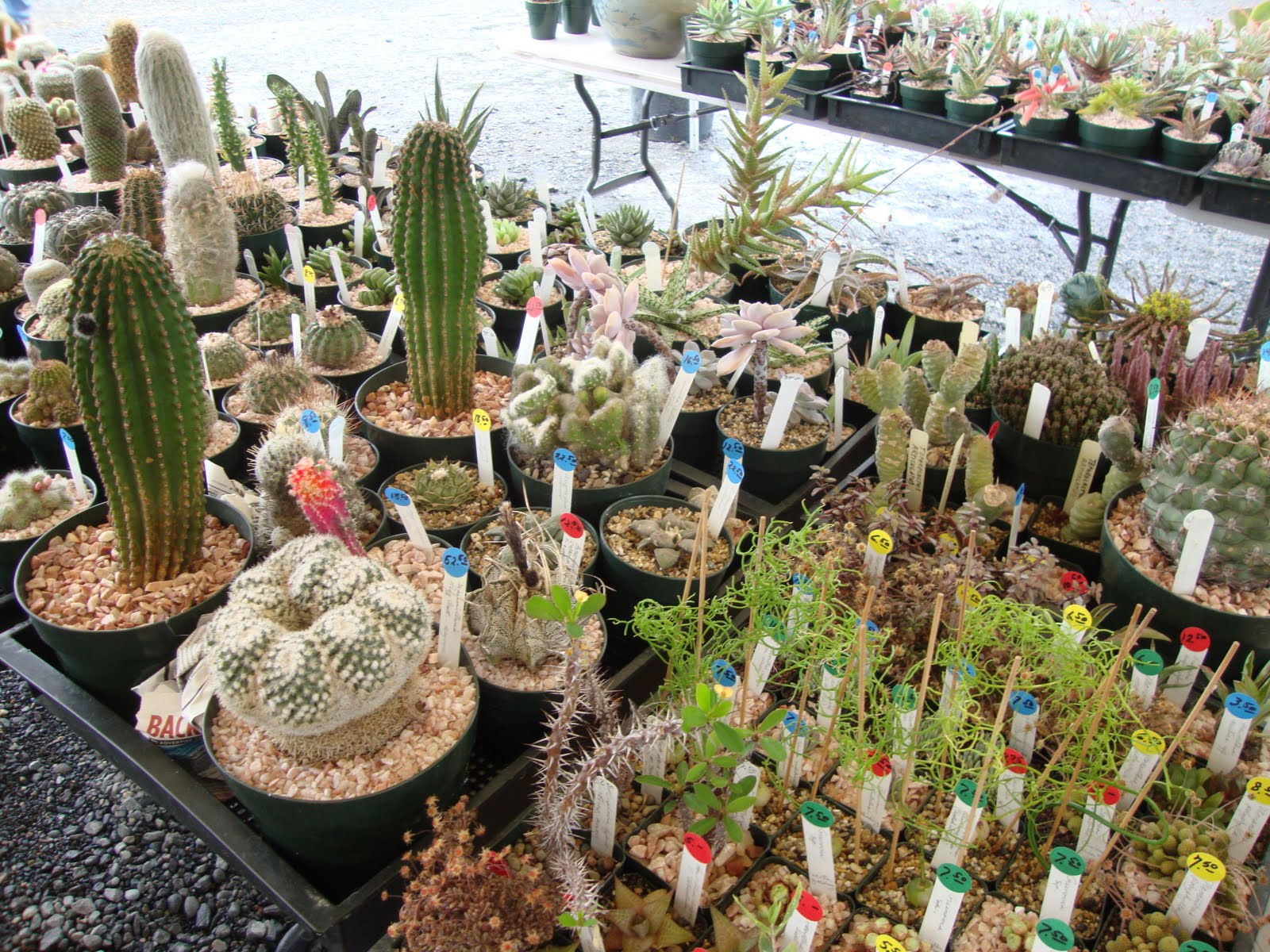 Oregon Cactus Succulent Society Show And