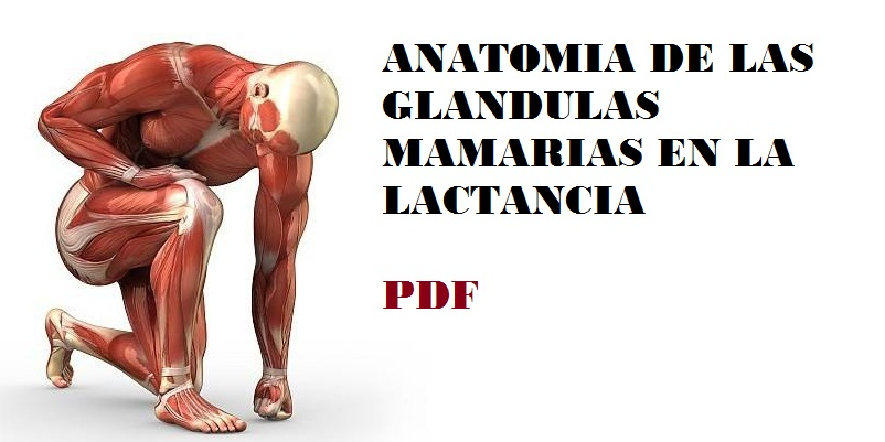 Anatomía de las glándulas mamarias en lactancia\