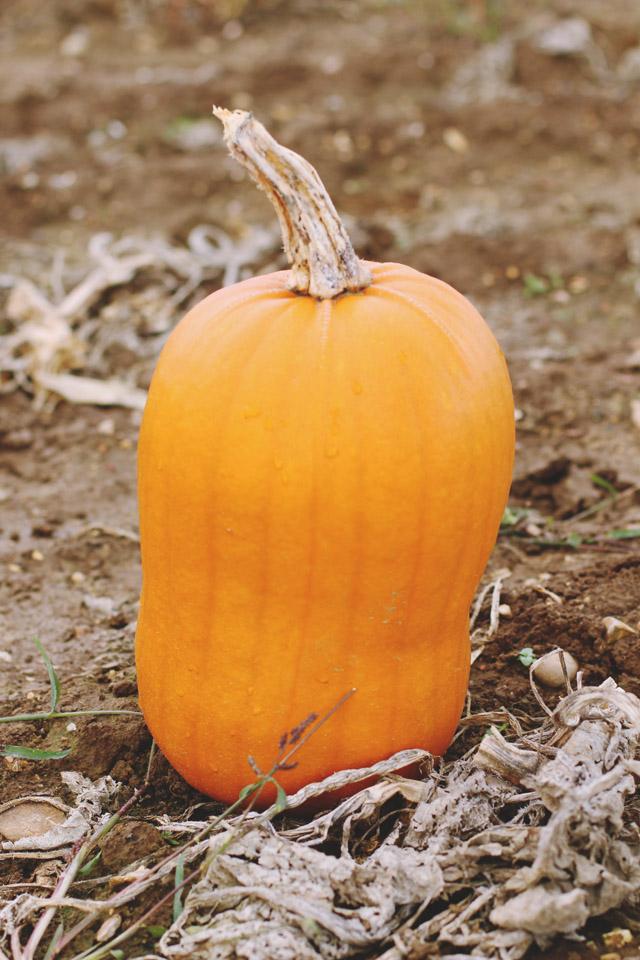 Misshapen Pumpkin