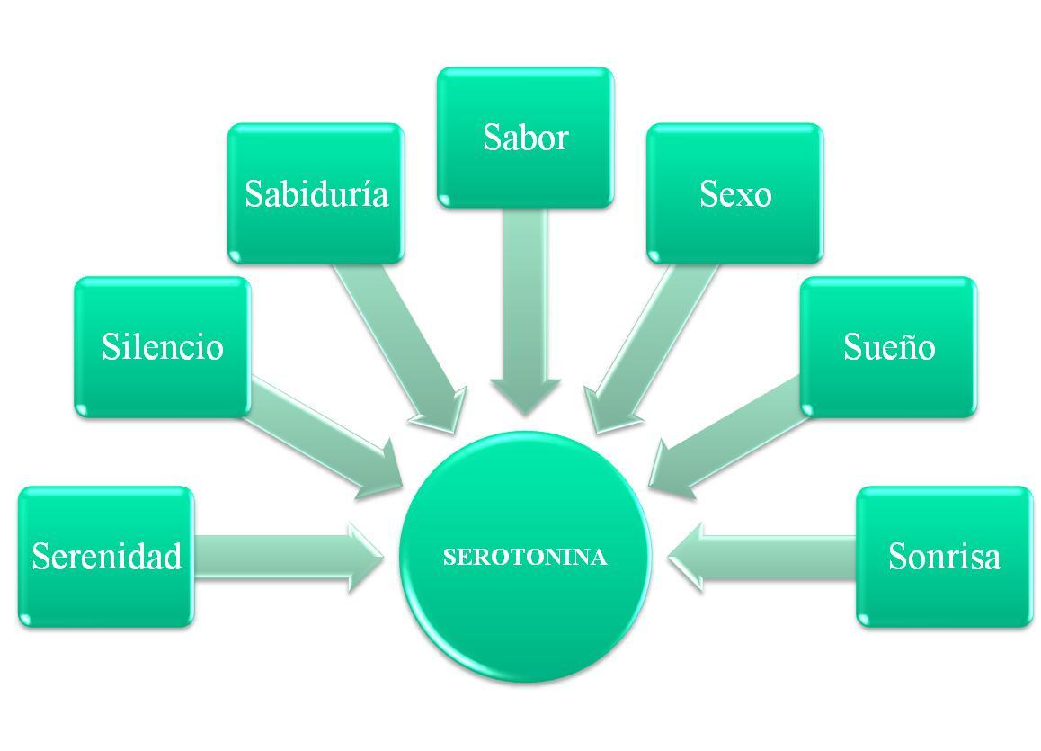 serotonina funcion en el amor