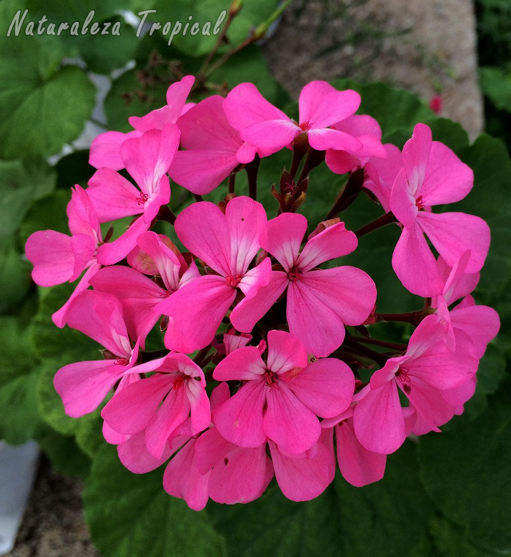 Naturaleza Tropical 8 plantas que florecen todo el año en macetas
