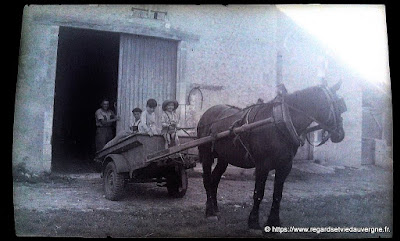Photo ancienne noir et blanc cheval