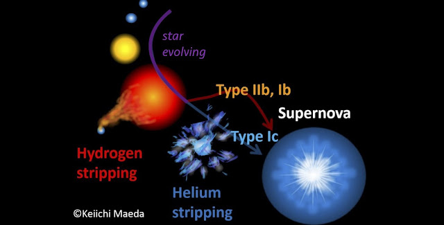 A massive star evolving and becoming a red supergiant, and finally exploding as a supernova. A binary companion may strip the star's hydrogen away (producing supernova type IIb/Ib), and for a more massive star the stellar wind expels the remaining helium layer (producing supernova type Ic). Image: Keiichi Maeda