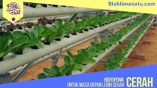 Hidroponik Untuk Masa Depan Lebih Sehat - Tanaman.bloklimasatu.com
