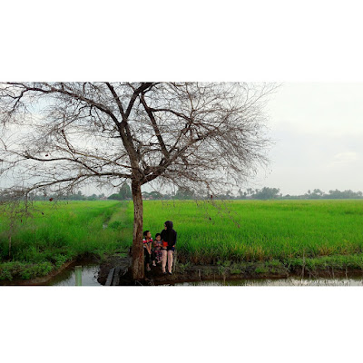 lifestyle, cikgu, cikgu sekolah, cikgu blogger, suasana kampung, hijau kampung, hijau sawah padi, pemandangan indah kampung