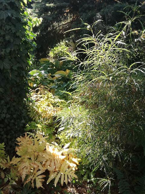 kruszyna pospolita i onoklea wrażliwa jesienią