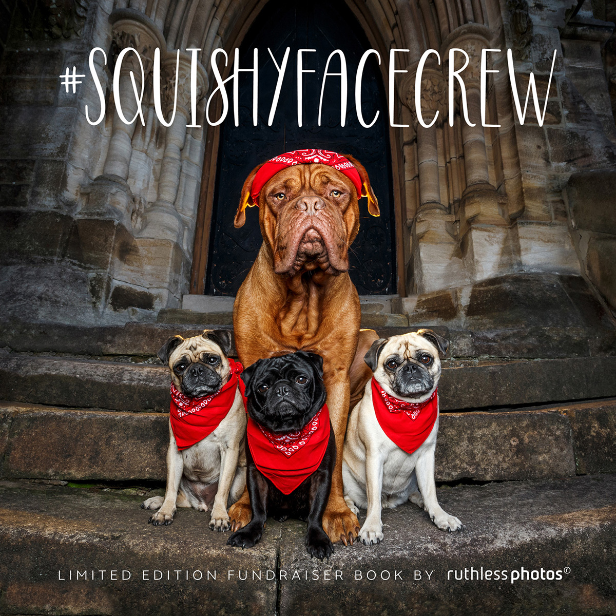 Mastiff and three Pugs sitting for the book cover of SquishyFaceCrew Book by Ruthless Photos