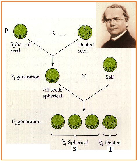 Kumpulan Skripsi Pendidikan Matematika Tahun 2013 Kumpulan Skripsi Model Pembelajaran Ips Contoh Skripsi 2015 Biologi Gonzaga Kumpulan Soal Genetika