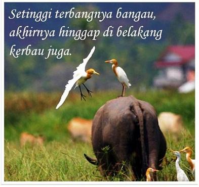 Kumpulan Peribahasa Indonesia Lengkap dengan Artinya