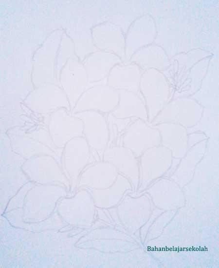 Menggambar Bunga Kamboja Menggunakan Pensil Warna