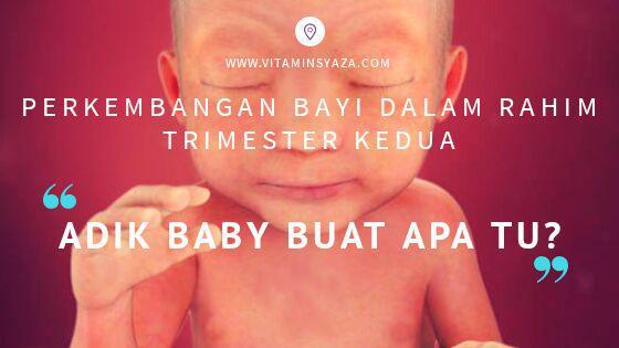 perkembangan bayi trimester kedua