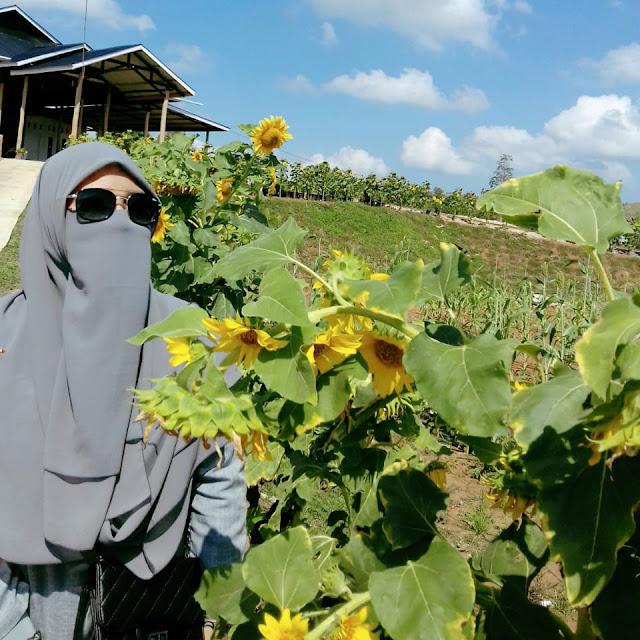 Pesona Taman Bunga Matahari Tambah Deretan Spot Selfie Aceh Besar