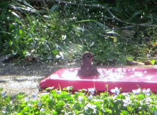 foster 39 s backyard bird sanctuary fun afternoon
