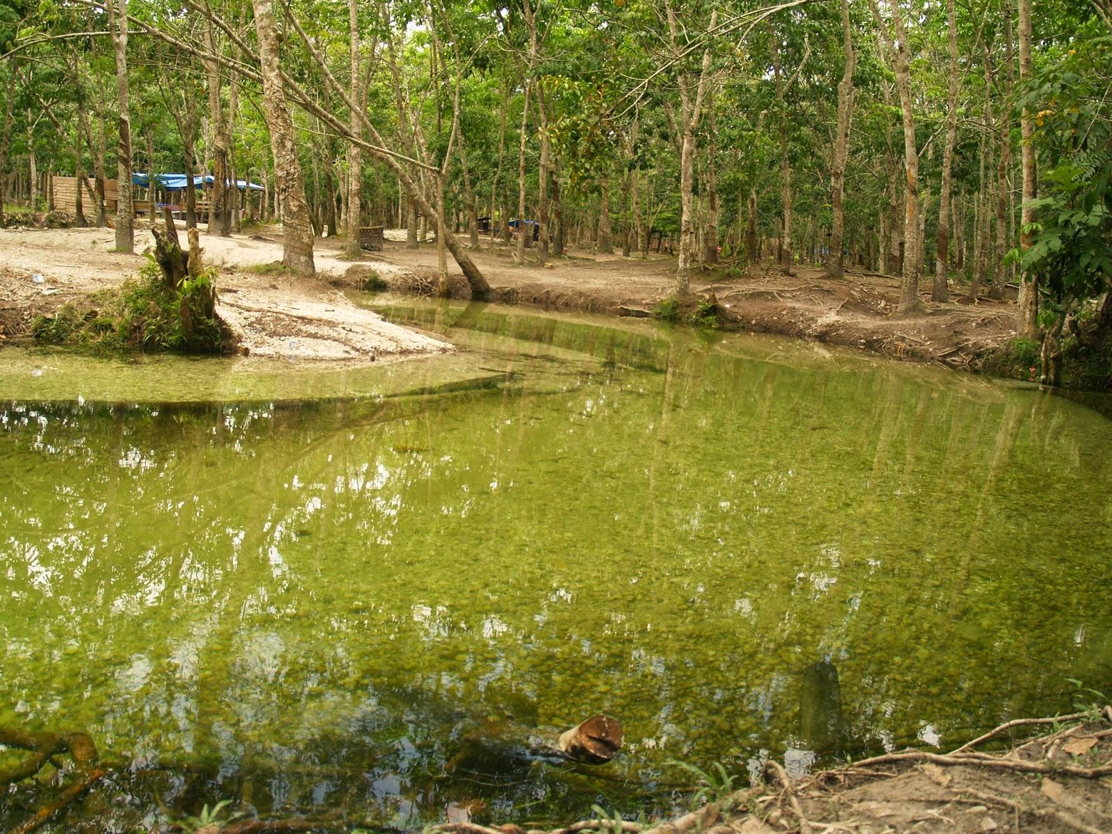 Pesona Sungai Hijau di Kampar Riau