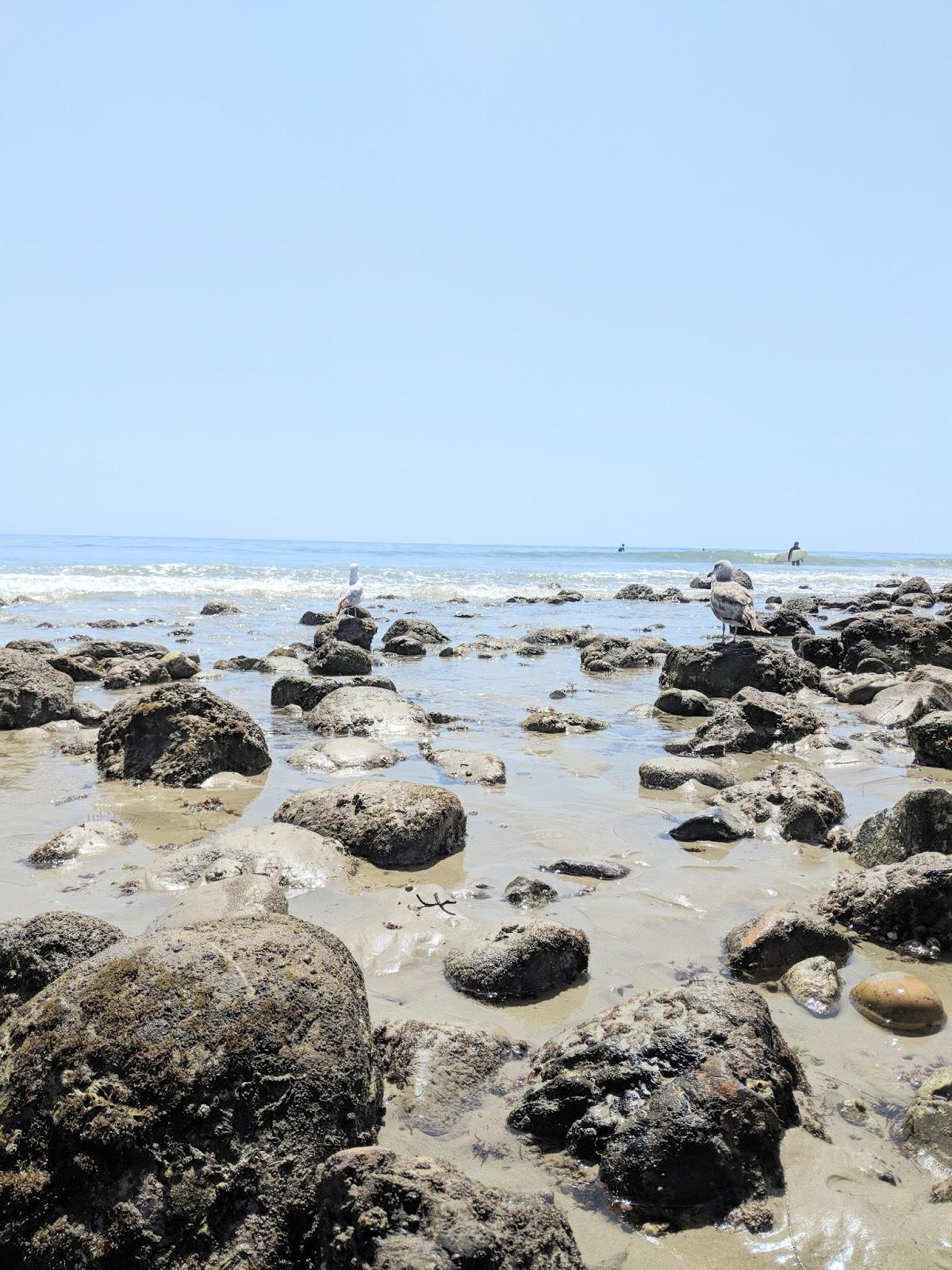 Topanga Beach Malibu Los Angeles California beach destinations tourist LA CA where to go what to do surf tide seagull topanga state park