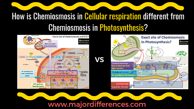 chemiosmosis in Cellular Respiration vs chemiosmosis in Photosynthesis