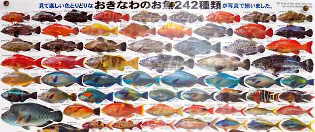 Fish identification poster, English, Japanese