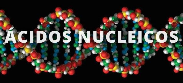 Acidos nucleicos y biologia