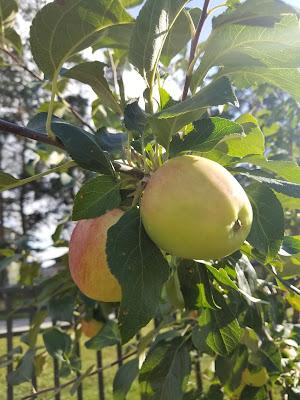 Mamie Clark's Apple Crisp