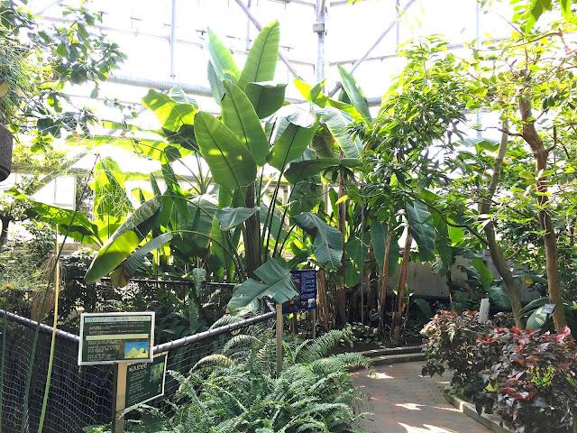 熱帯エリア ときわ公園、植物園もリニューアル。 プラントハンター西畠清順が手がける?