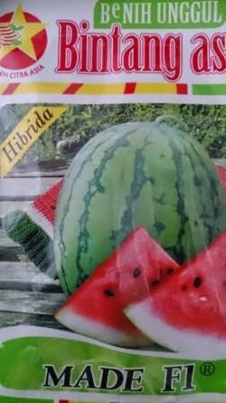 Semangka Made, Daging Merah, BCA, Bintang Citra Asia, buah keras,tahan simpan,tahan pecah, tahan angkut, cepat panen,rasa manis,murah