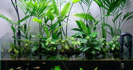 aquascapejuara: Jenis Tanaman Hias Air Tawar Untuk ...