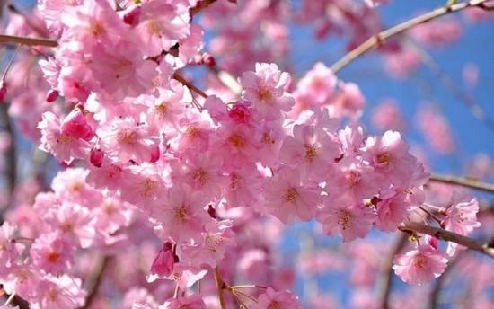Las 10 Flores Mas Bellas Del Mundo