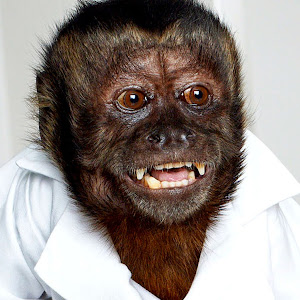 Crystal the Monkey