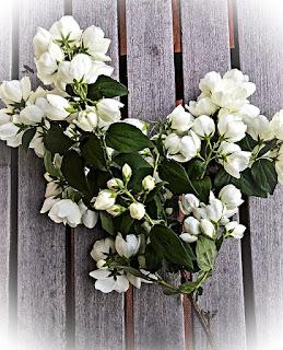 Jenis Bunga melati putih paling harum