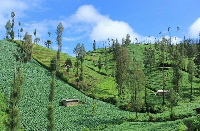 Desa Ngadas Malang