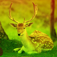 Games2Rule Deer Forest Escape