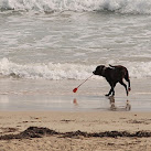 Petition For Brevard County Beaches To Allow Dogs Nears 5,000 Signatures