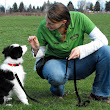 6 Tips For Training Dogs | Aluanada's Blog