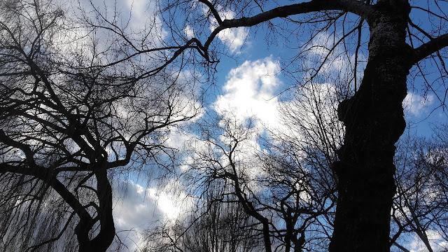 L'arbre et son rêveur Brigitte Maillard