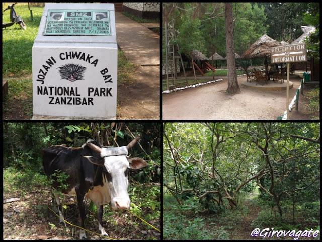 parco naturale foresta Jozani Zanzibar