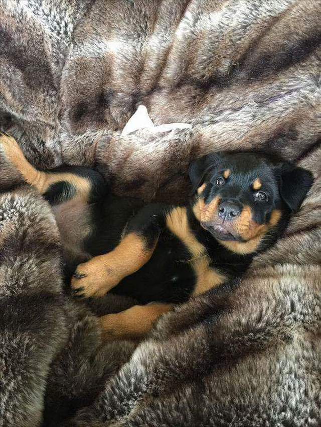 Cute dogs - part 206, best cute dogs, dog images, funny dog photos