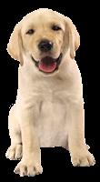 Cão feliz em png
