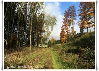 Schöner Laubwald im Herbst