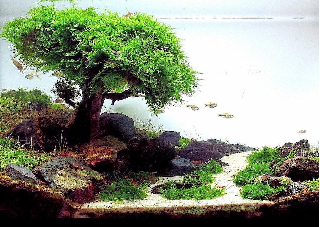 Hướng dẫn buộc rêu vào cây bon sai