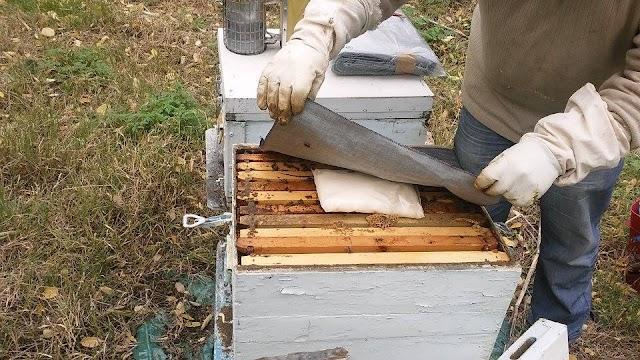 """Μελισσοκόμος τοποθετεί κηρόπανα """"τζίν"""" πάνω απο το ζαχαροζύμαρο: Μια καλή λύση για μόνωση"""