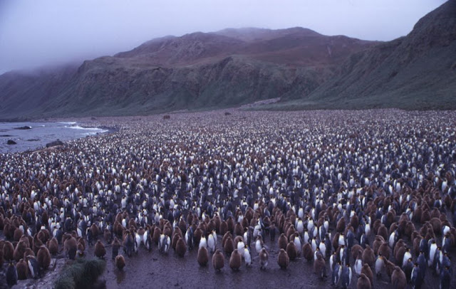 The Australian Island occupied By Two Million Penguins