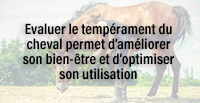 Evaluer le tempérament du cheval permet d'améliorer son bien-être et d'optimiser son utilisation