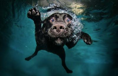 Foto de perro bajo el agua