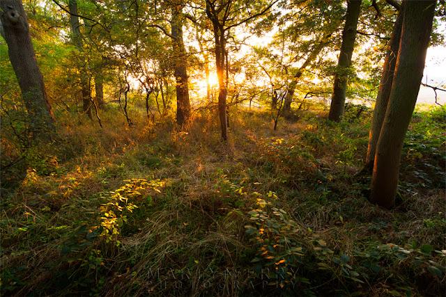 Sunlight dapples the woodland floor in Cambridgeshire